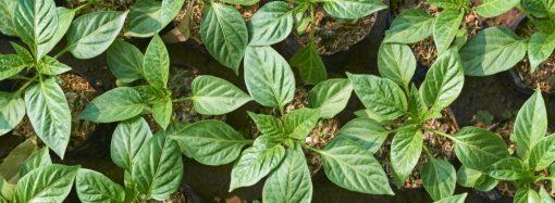 Doświetlanie roślin zimą – poradnik dla początkujących