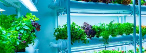 Jak wybrać lampę do growboxa, by nie dopuścić do poparzenia liści?